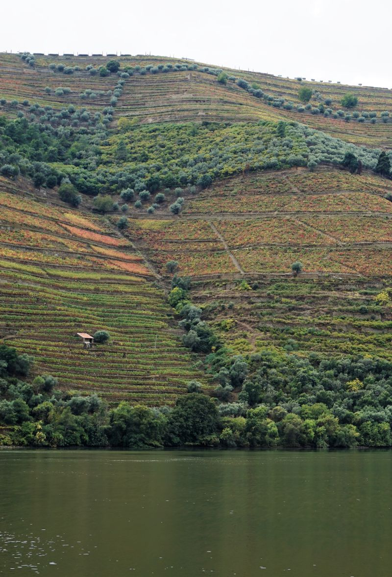 Scenic views through the Douro valley.